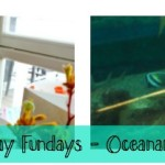 Thursday Fun Day's – Oceanarium