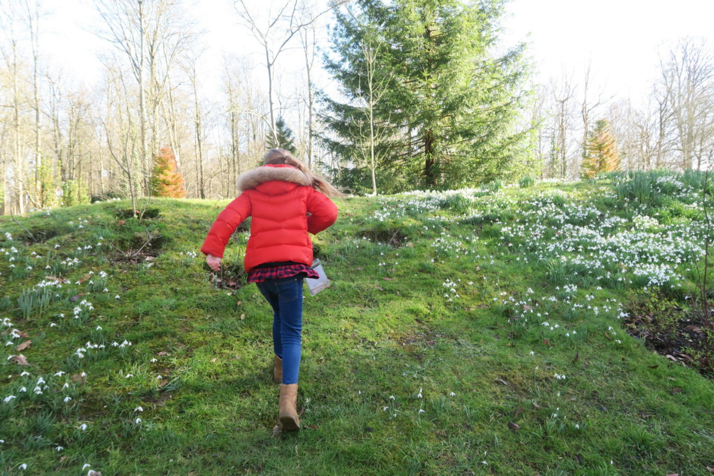 Fun Projects to Transform Your Garden This Winter
