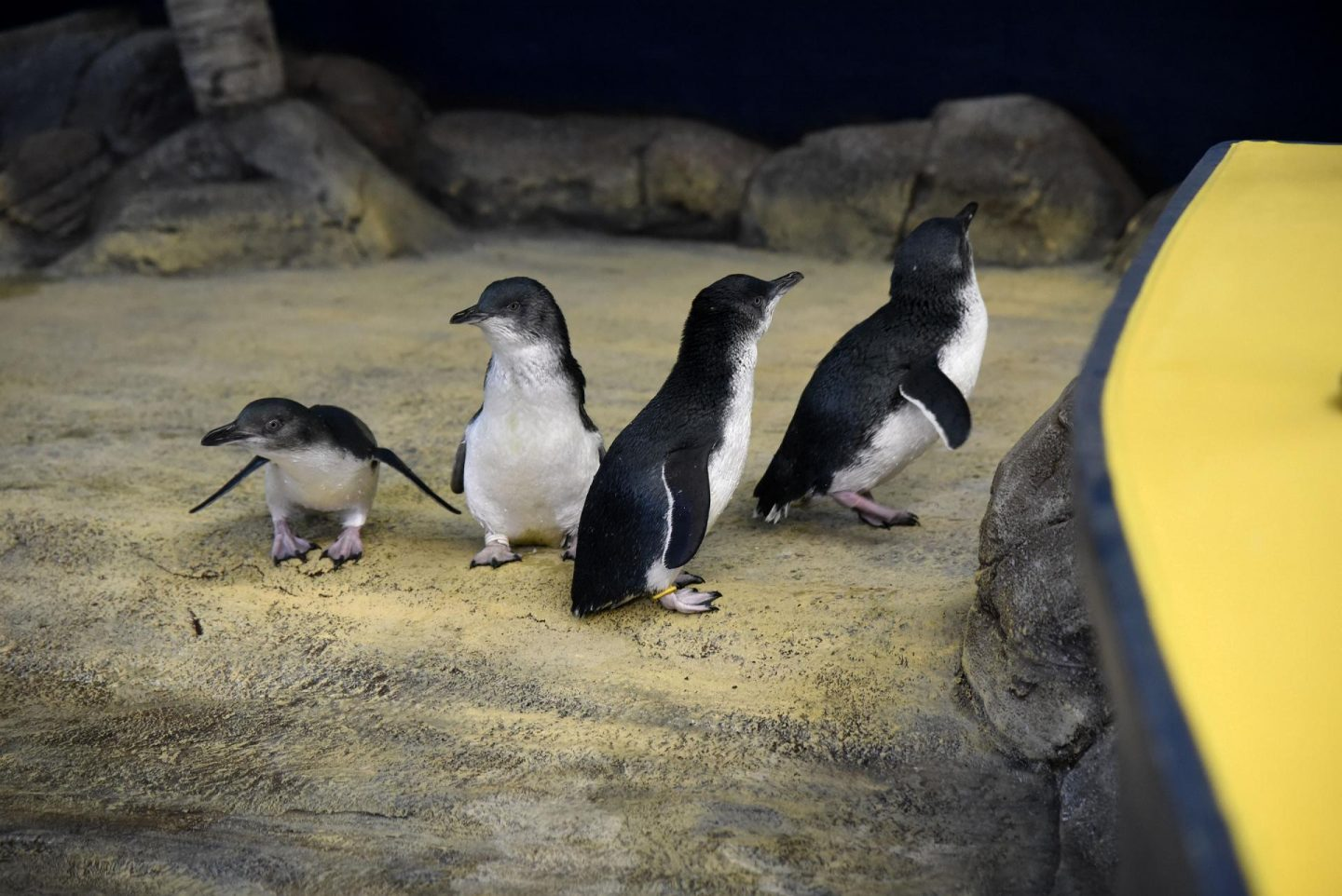 Meeting new faces at Weymouth Sea Life Adventure Park